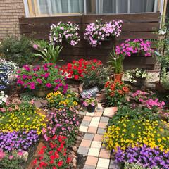 いつもありがとう/ガーデニング 毎日の暑さで満開になりました。  花殻摘…
