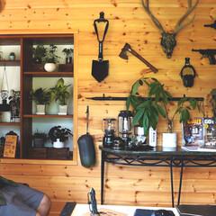 リノベーション/リフォーム/ログハウス/観葉植物のある暮らし/DIY/インテリア 【DIY】和室からログハウス風へセルフリ…