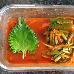 冷蔵庫整理/夏野菜/野菜保存/夏に向けて/キッチン雑貨/おうちごはん/... *大葉キムチと大葉の保存法* ↓↓↓ 以…