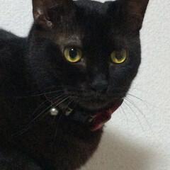 ねこだいすき/猫との暮らし/ねこ/暮らし 白黒チビがクリオ君 ミケチビがトリちゃん…(5枚目)