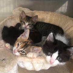 仔猫祭り/癒しニャンコ/猫との暮らし 仔猫は、癒される〜💕💕 もしかしたらウチ…(1枚目)