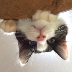 仔猫/保護猫/ねこ/暮らし チビニャンズがウチに来てボチボチ 2週間…(3枚目)