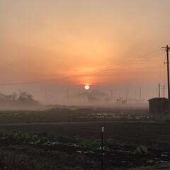 お気に入り 朝陽に霧がかかって素敵ですね💖