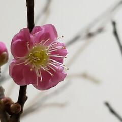 盆栽/種うえ/挿木/挿し木/園芸/シンビジューム/... 明けましておめでとうございますm(_ _…