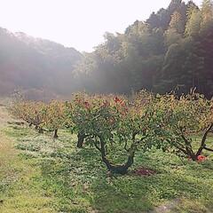 「秋の果物達と景色≈**🍃 ①家の近くの道…」(6枚目)