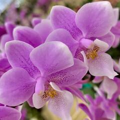 お出かけ/Flower 🌈🌻🌺🌴🏖  🦩こんばんは(*^▽^*)…