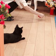 黒猫/ハチワレ猫 こんばんは😊 皆様お疲れ様です♡  現在…(2枚目)