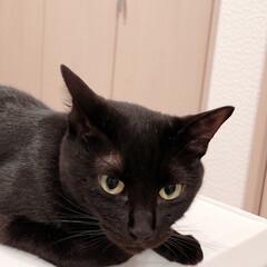 黒猫/ハチワレ猫 こんばんは〜。 今日も1日お疲れ様でした…(2枚目)