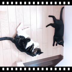 黒猫/ハチワレ猫 こんにちは😊 ずっと雨☔️ですね。   …
