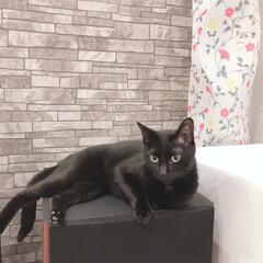 ハチワレ/黒猫 こんばんはー😊 現在のゼウクマです☆ ゼ…(3枚目)