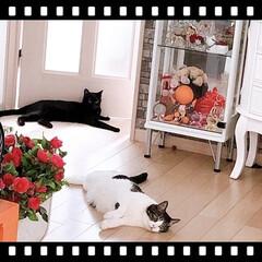 黒猫/ハチワレ猫 こんにちは😊 ずっと雨☔️ですね。   …(2枚目)
