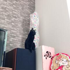 黒猫/ハチワレ猫 おはようございます😊 今朝のゼウクマです…(2枚目)