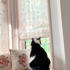 黒猫/ハチワレ猫 おはようございます😊 今朝のゼウクマです…