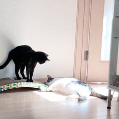 黒猫/ハチワレ猫 こんにちは😊 今日は一日天気良かったです…
