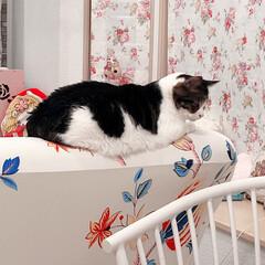 黒猫/ハチワレ猫 こんばんは〜。 今日も1日お疲れ様でした…