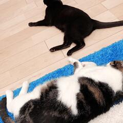 黒猫/ハチワレ猫 こんにちは😊 今日は一日天気良かったです…(2枚目)