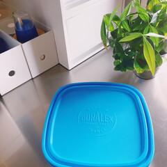 冷凍保存/電子レンジ対応/保存容器/フランス製/強化ガラス/DURALEX/... 𖧷DURALEX𖧷  定番のカレボウル𓂃…