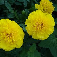 熱中症/Flower 🌴☀️SUMMER🍧🌴おはようご(-´∀…