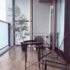 狭小マンション/マンションライフ/ベランダインテリア/オリーブの木/バルコニー/ベランダ/... ベランダにはオリーブの木とチェアを。 床…
