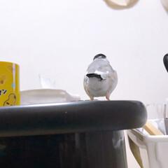 小さな後ろ姿/とても小さいのに存在が/かわいい♬/文鳥/だいふく