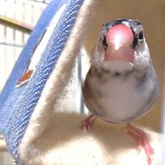 こんにちは/今日は寒いですね/三角テントから/ウィンク/文鳥/だいふく
