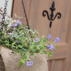 寄せ植え/物置/ハンギングバスケット/100均/ダイソー/おしゃれ/... 物置×お花⚘ 物置に吊るしてあるお花たち…
