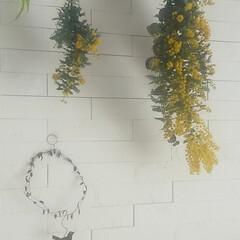 初挑戦/感謝/暮らしを楽しむ/ミモザスワッグ/ミモザ/季節の花/... 3/8はミモザの日🌼  一気にお家に春を…(2枚目)
