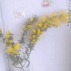 初挑戦/感謝/暮らしを楽しむ/ミモザスワッグ/ミモザ/季節の花/... 3/8はミモザの日🌼  一気にお家に春を…(1枚目)
