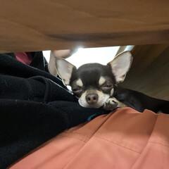 犬ペット 眠たいなぁ🥱💤(1枚目)