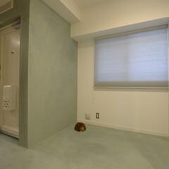 土間/玄関/モールテックス/スクリーン/趣味を楽しむ/断熱材 築40年のマンションは新聞ポストも味があ…