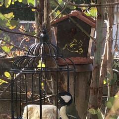鳥かご/ダイソー 100均グッズで作る野鳥の餌場  大きな…