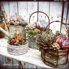 多肉植物の寄せ植え/多肉ちゃん/多肉寄せ植え/多肉植物/多肉/junk/... ①jewel gardenさんのリメ缶❤…