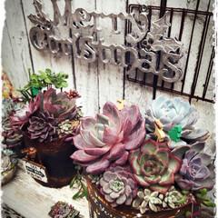 多肉寄せ植え/手作り花壇/花壇DIY/多肉/クリスマス/クリスマス2019/... 🎄✨Happy Merry Christ…