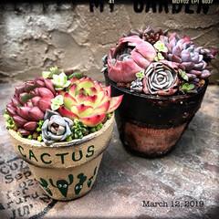 小さな庭/庭/garden/gardening/多肉/多肉植物/... 作家さんのリメ鉢や木箱で新しい寄せ植え❤︎