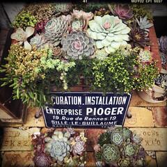 庭づくり/gardening/garden/shhgardening/多肉/多肉植物の寄せ植え/... こちらでははじめての投稿です✧⁺⸜(●˙…