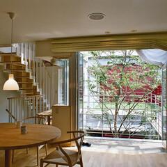 屋上緑化/中庭/シンボルツリー 2階にあるリビング・ダイニングルームから…