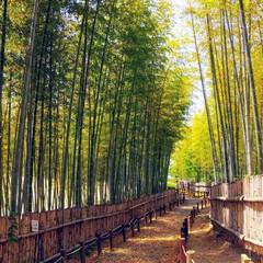 写真/静寂な空間/竹林の小径/竹林 とっても素敵な竹林❣️ 青々としていて、…(1枚目)