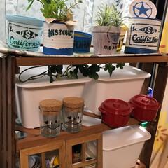 マッシュルーム缶/ステンシル/リメ缶 今日は午後からリメ缶に挑戦! 漆喰の塗料…