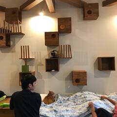 猫ちゃん/リフォーム/建築 旦那さんの実家。 義妹のお部屋は猫カフェ…