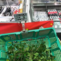節分/フード 近所のスーパーにて イワシの横に柊ご自由…