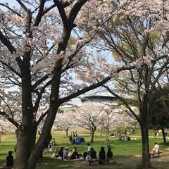 大阪プール/おでかけ/建築 満開の桜を横目に大阪中央体育館へ  桜の…