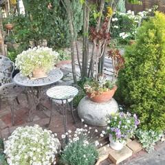 ガーデニング 庭のプチ改造完成♪ 色々考えて一番シンプ…(1枚目)