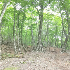 新緑/山登り 新緑♪  自然の美しさで癒されました~(2枚目)