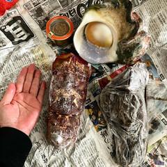巨大/手作りランプ/手作り/ランプ/ヤコウガイ/夜光貝/... この前食べた夜光貝の殻を友達夫婦の旦那さ…(2枚目)