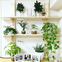 ラブリコ/観葉植物/リビング/神棚/DIY/インテリア/... 神棚。 お気に入りの空間♫