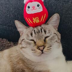 ぽこちゃん/うちの子/あけおめ/冬/ペット/猫/... 今年もいいことありますように!