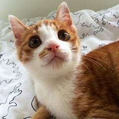 だいちょん/うちの子/ペット/猫 小さい頃のだいちょん♡