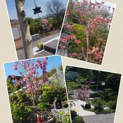 ガーデニング/Schweiz/スイス/グリーン/建築 日本のお庭みたいでしょ? でもここはスイ…