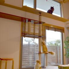 猫/畳/小上がり/ハイサイドライト/構造体/鈴木アトリエ/... 猫と暮らす工夫は、お施主さんと相談し、 …