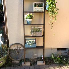ガーデニング/ターナーミルクペイントガーデン/タナー/岡持ち/ギャザリング/廃材 家にたーんとある中途半端な廃材で庭にもタ…